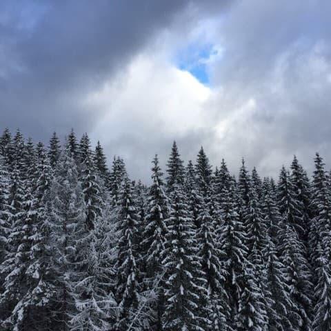 буковельский лес