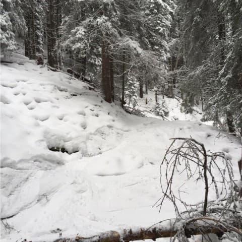 зимой в Буковеле