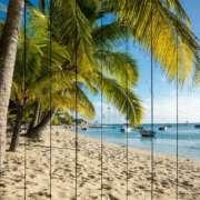 пальмы на белом берегу