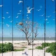 дерево и чайки