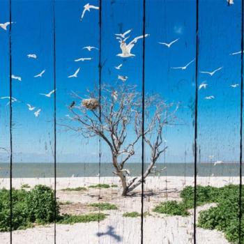 Фото на дереве